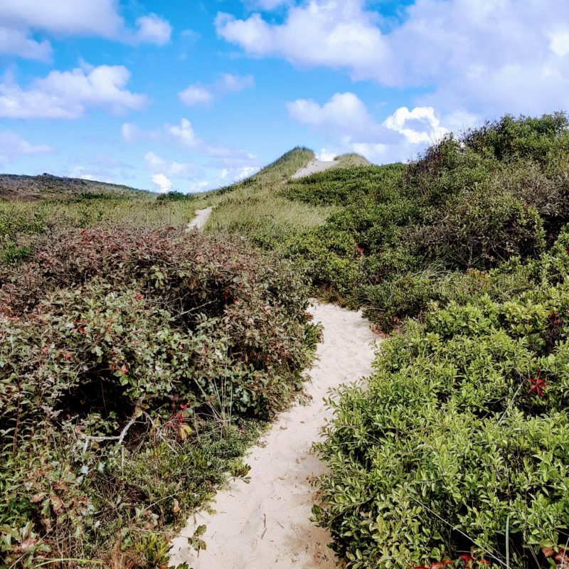 A photo of a winding walking trail